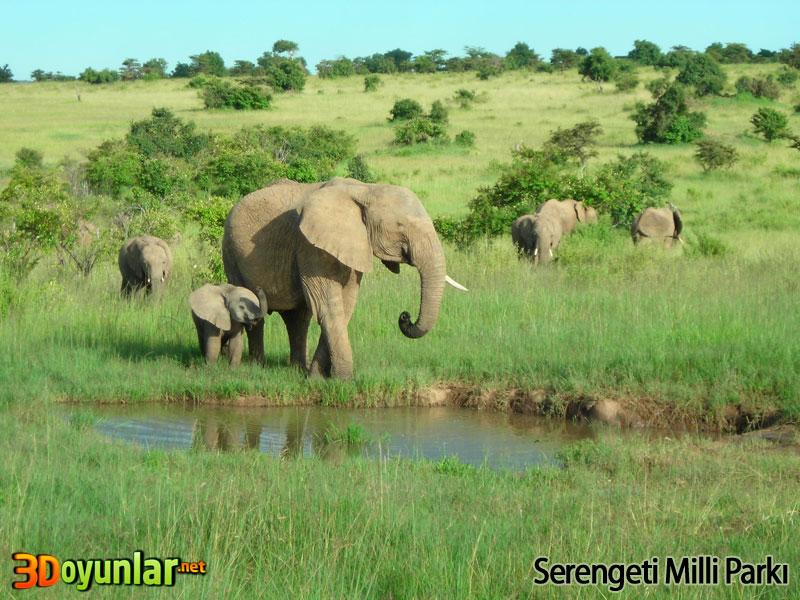 Serengeti milli parkından bir fotoğraf fil ve yavrusu su içerken